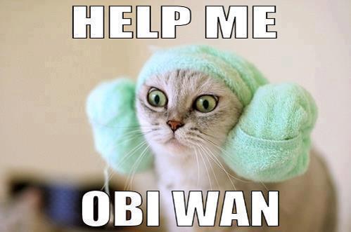 Cat-Leia.jpg